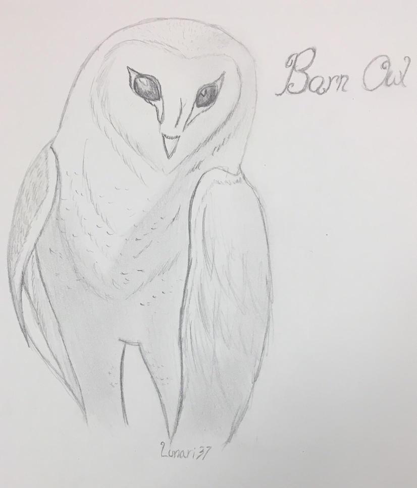Barn owl by Lunari37