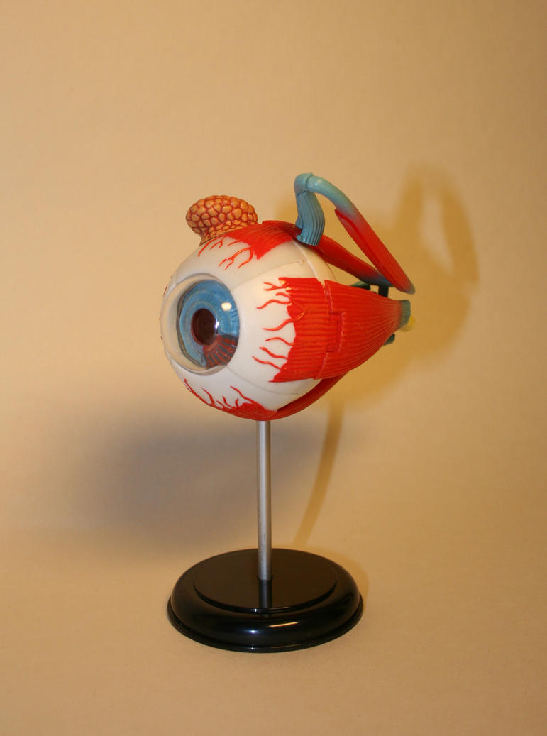 Anatomical figure: Eye 3 by deadenddoll-stock