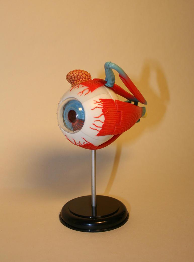 Anatomical figure: Eye 3 by deadenddoll-stock