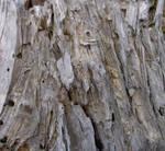 Dry wood texture I