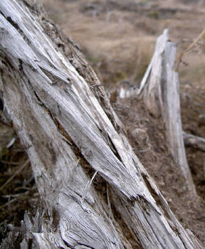 Dry wood II