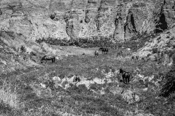 horse canyon by InnocentEye