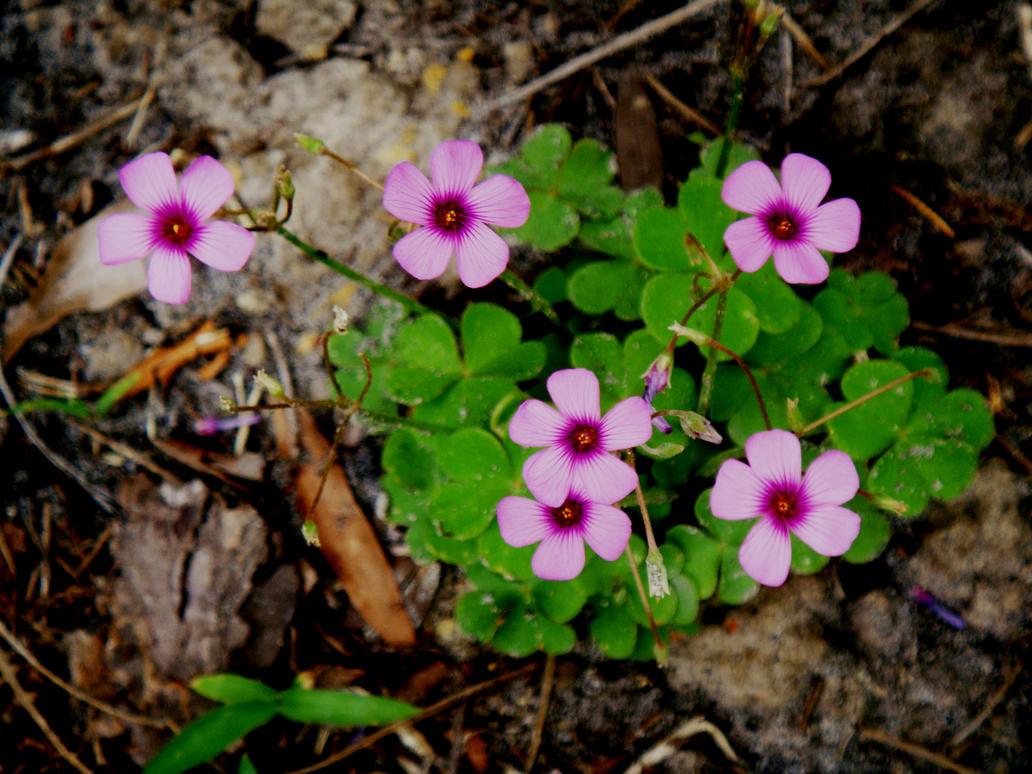 Flower Family by Ketiszkusz