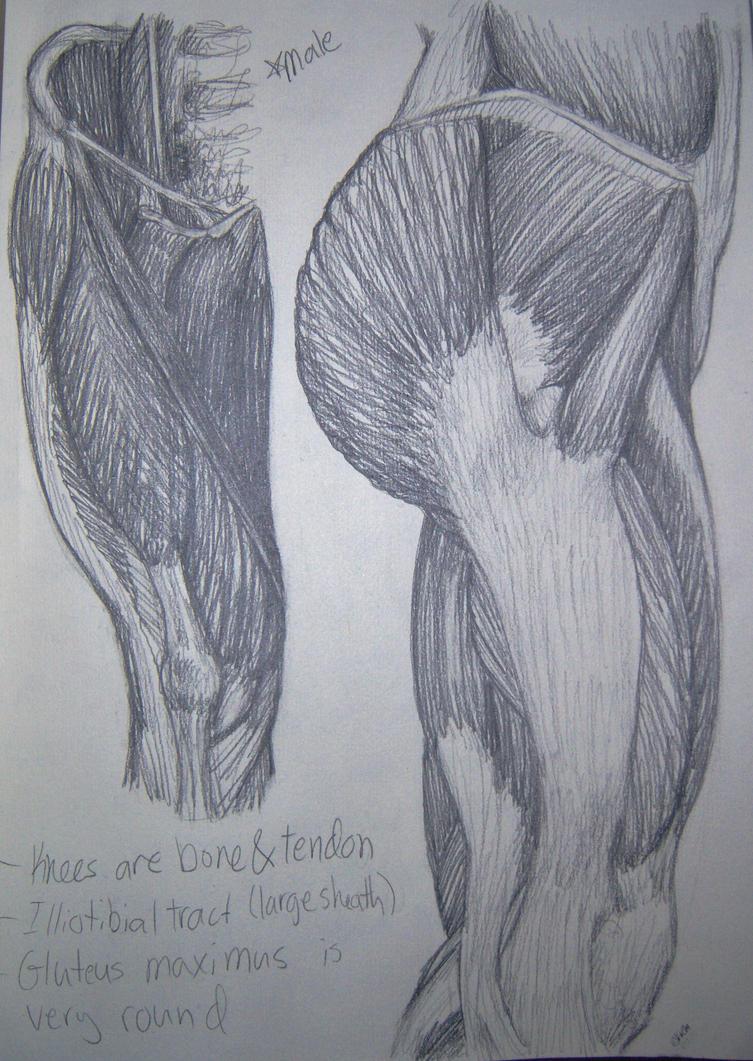Male Leg Anatomy Sketches by KittenFanUnlimited on DeviantArt