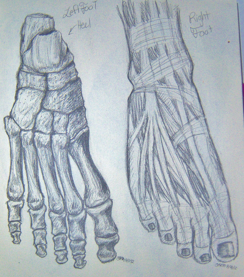 Foot Anatomy Sketches by KittenFanUnlimited on DeviantArt