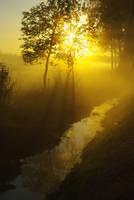 Golden Sunrise by MyGrannyOwnzYou