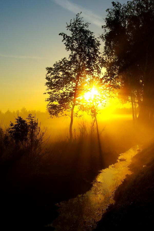 Golden Sunrise 2 by MyGrannyOwnzYou