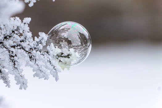 iced bubble 2