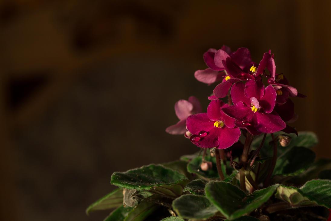 Redish Purple Violet by sztewe