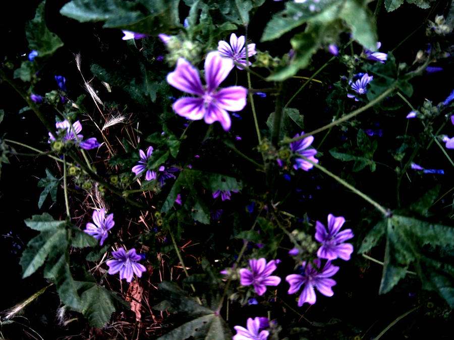 dark purple flowers  flower, Beautiful flower