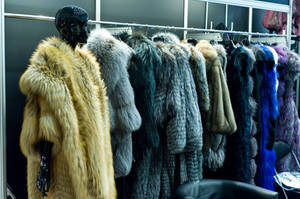 The Sorceress's Fur Wardrobes