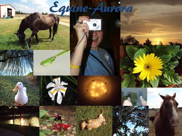 Equine-Aurora's Profile Picture