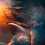 Whale on Sky