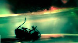 Severly Depressed Ant