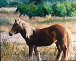 Shackleford Pony 8 (final)