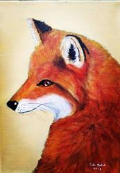 Red fox by Fredamary