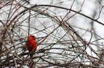 130616 Cardinal