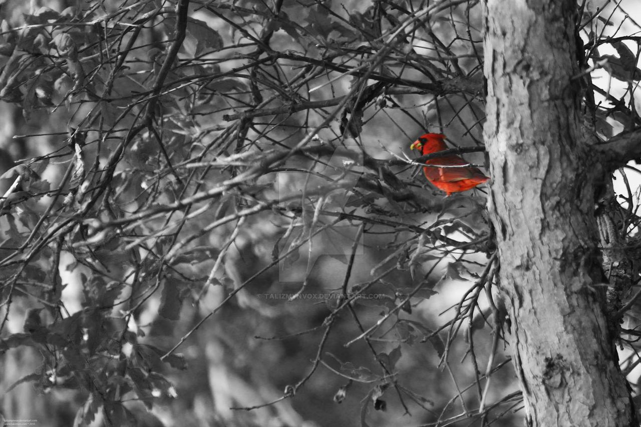 150530 Cardinal by TalizmynVox