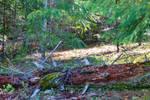 20190921 Sugar Pine Reservoir 30