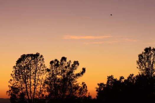 20190920 Like Birds in the Sky