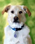 202 December: Henry the Dog