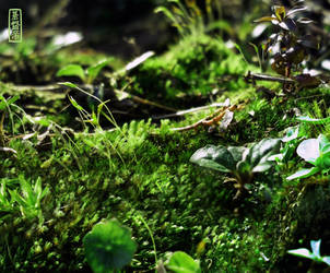 Leprechaun Land by BesidesThat