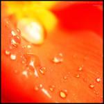 .: Orange :.