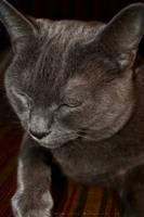 Sleeping Cat by MrScruffy
