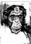 sb-ape study