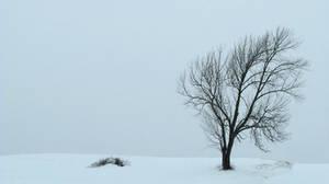winter stock 1