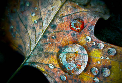 Magnified Autumn