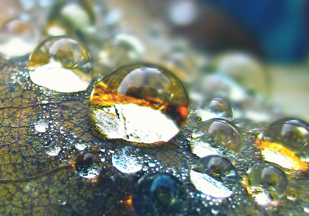 Dews by StellarDia