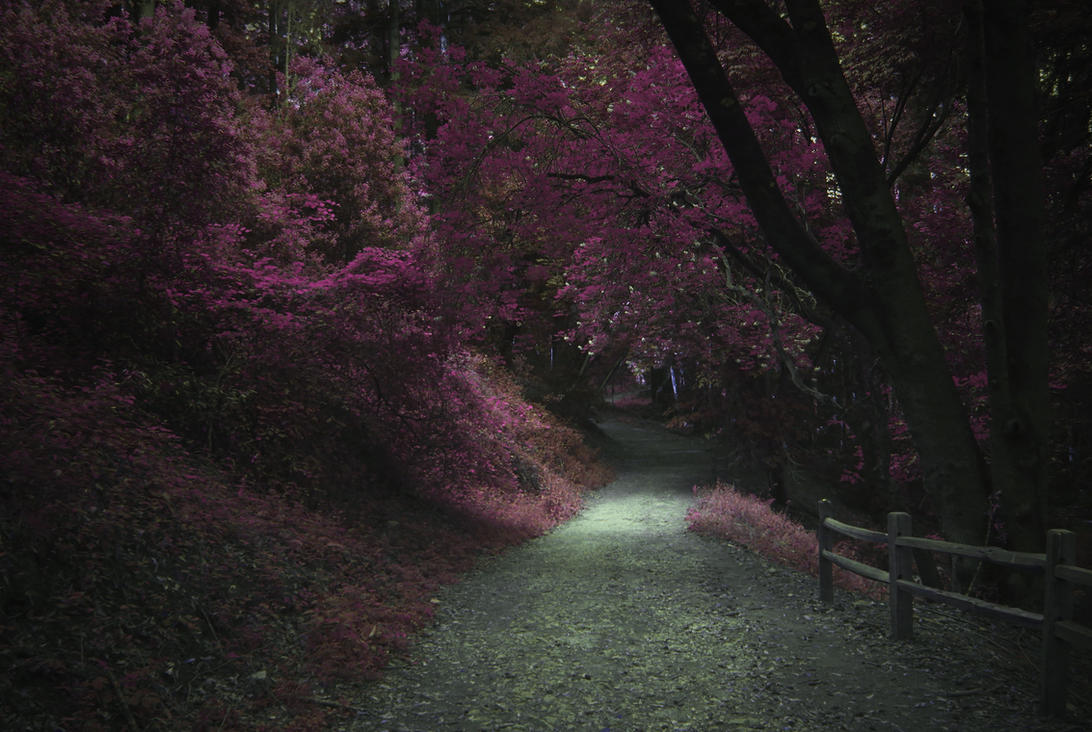 Amaranth Path by StellarDia