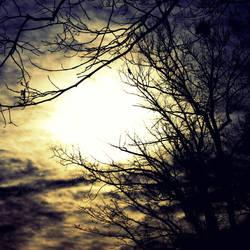 Lucid Morning Dream