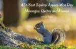 43+ Best Squirrel Appreciation Day Messages, Quote