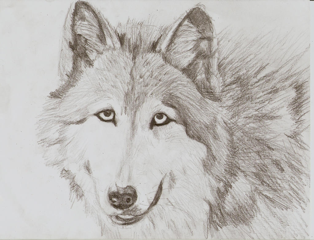 wolf drawings new calendar template site