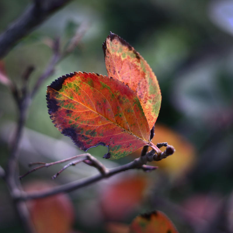 Beautiful garden wallpaper - Autumn Butterfly By Kindledeath On Deviantart