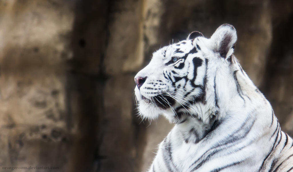White Tigress III by OrangeRoom on DeviantArt