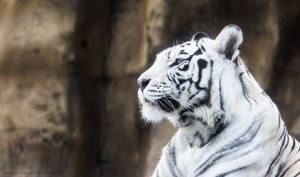 White Tigress I