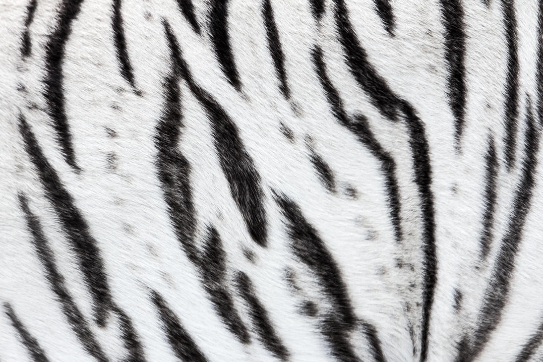 Tiger Stripes Body Paint