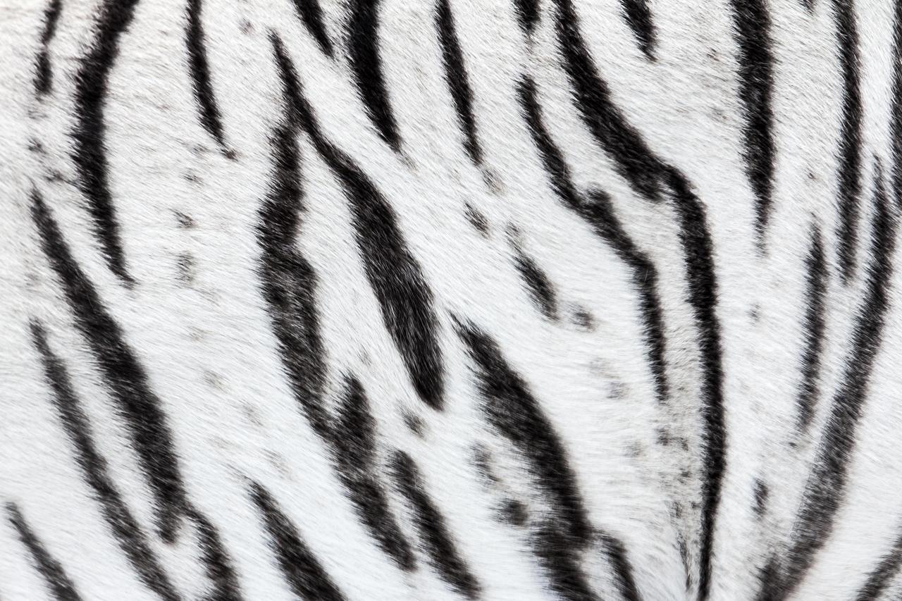 Tiger stripes by orangeroom on deviantart - Tiger stripes black and white ...