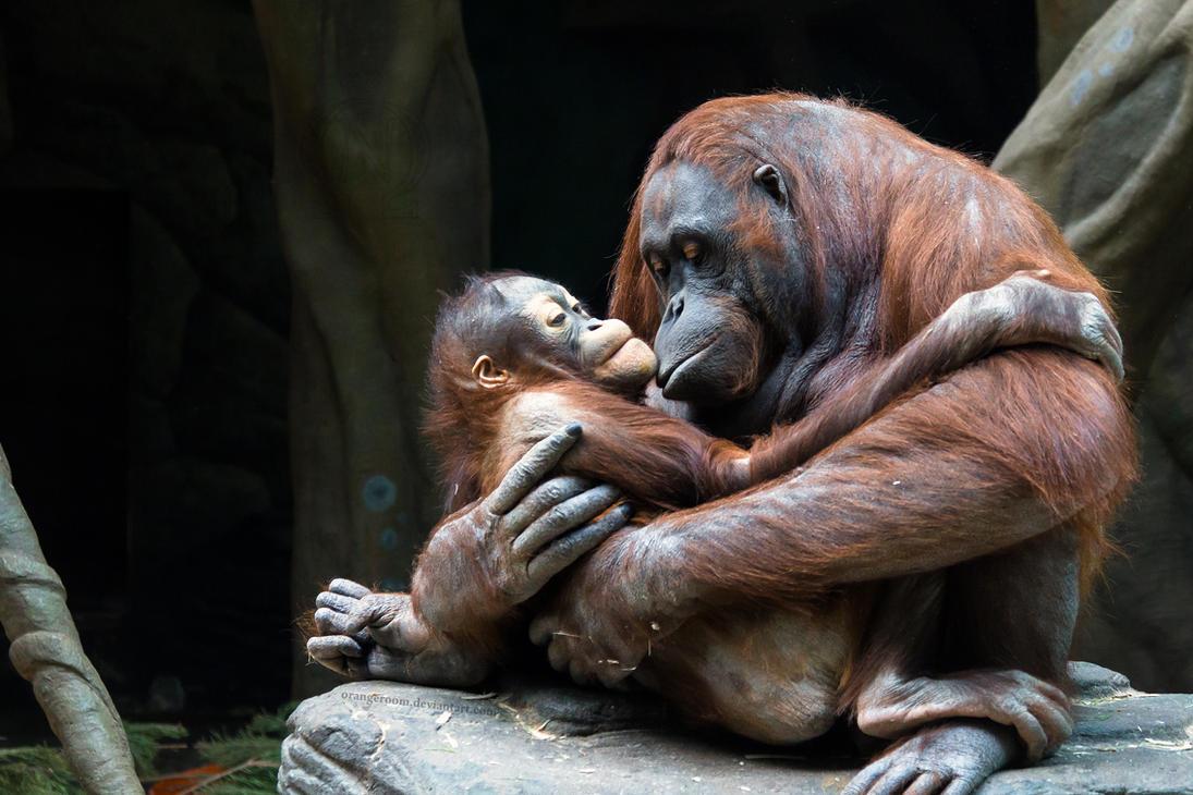 Mother's Love by OrangeRoom
