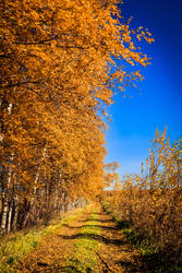Autumn Days III