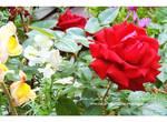 Flowers Garden IV