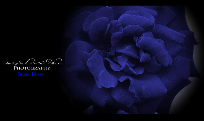 Blue Rose by RazielMB-PhotoArt