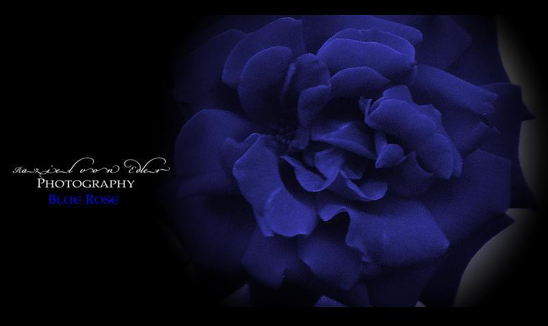 Blue Rose by RazielMB-PhotoArt