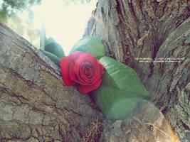 Sun rose by Ellysiumn-GvE