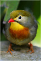 Small Bird by Jer-Trow