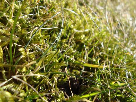 00555 Grass view