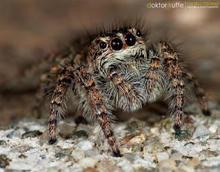 Spider Jump by Stefano-Coltelli